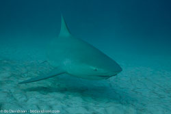 Rays and Sharks